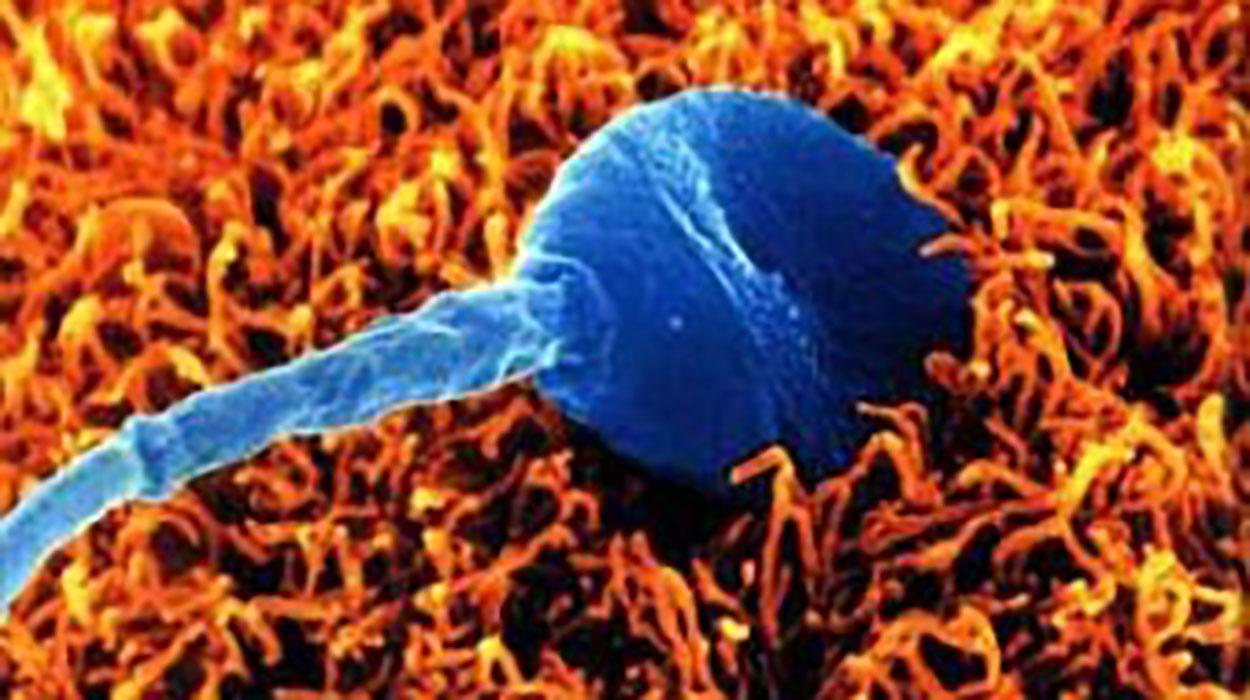 En la inseminación artificial ¿dónde se dejan exactamente los espermatozoides?