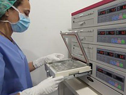¿Cuáles son los pasos para la inseminación artificial en el laboratorio?