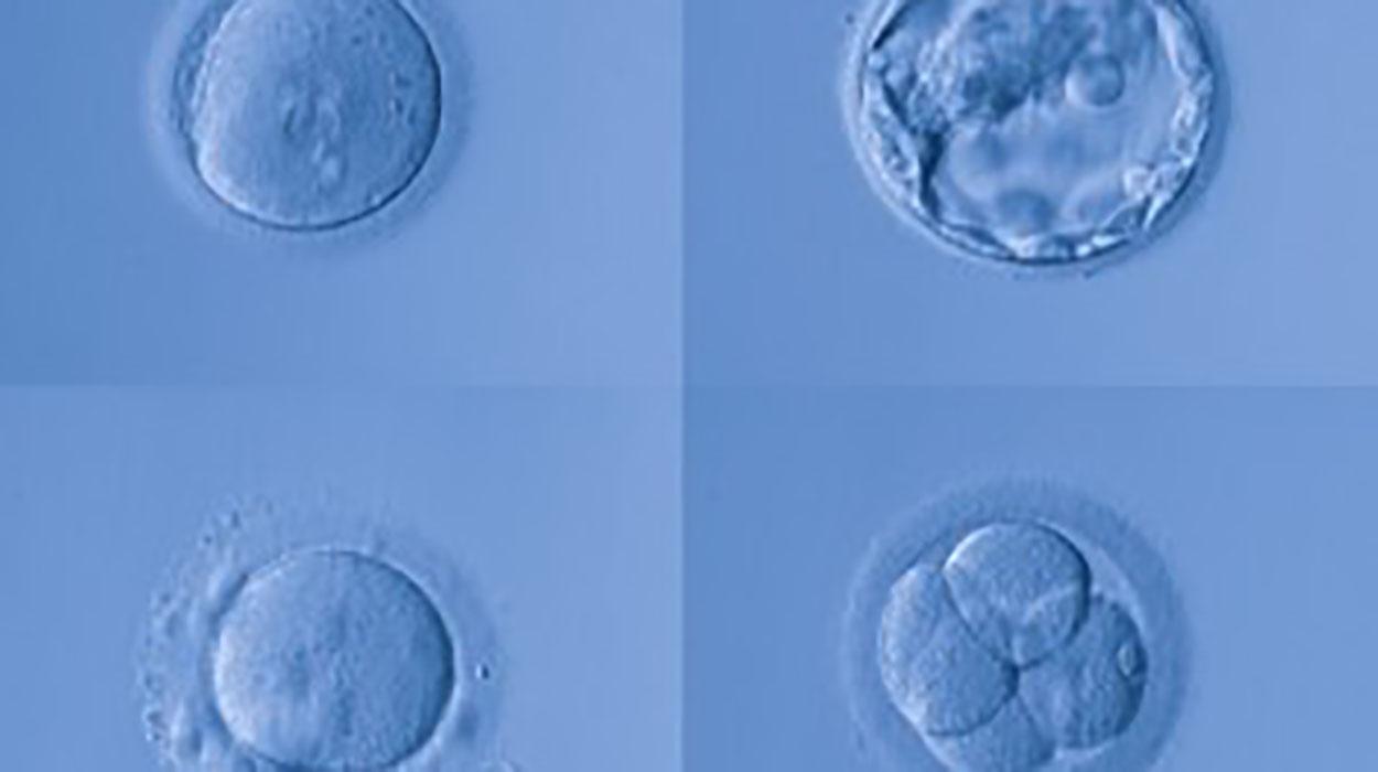 No quiero vitrificar embriones ¿Qué puedo hacer?
