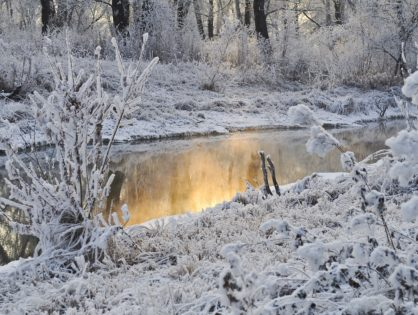 Congelación de óvulos y reproducción asistida como respuesta al invierno demográfico